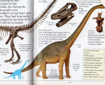 02 bl brachiosaurus恐竜.jpg