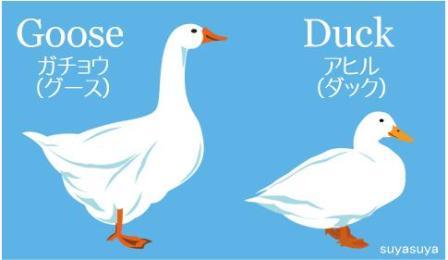 06 鵞鳥.jpg