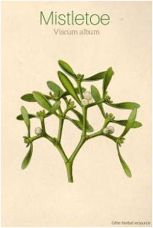 mistletoe1.jpg